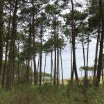 Situation de l'Office National des Forêts