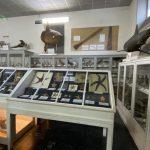 Visite de l'aquarium d'Arcachon avec Jean-Marie Froidefond