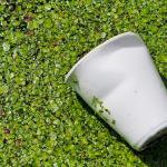 Interdiction des emballages à usage unique constitués de polymères et co-polymères styréniques à partir de 2025